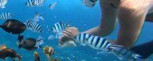 lembongan snorkeling2